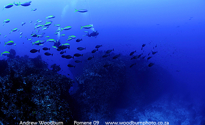 scuba dive 3 sisters reef at Pomene copyright A Woodburn