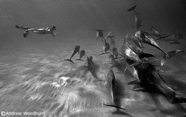 dolphin Pod & clara photo copyright Andrew Woodburn