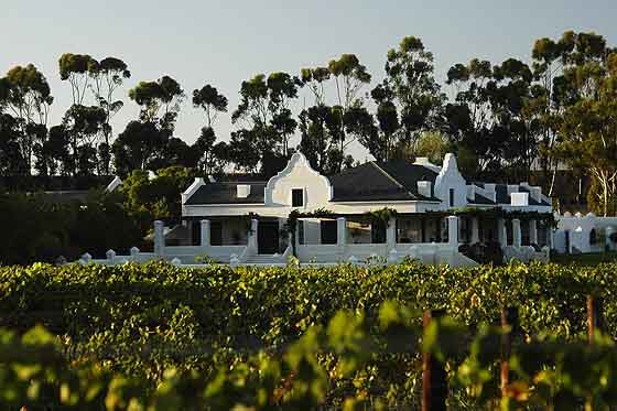 copyright Andrew Woodburn Morgansvlei Vinyard, Tulbagh valley, south africa