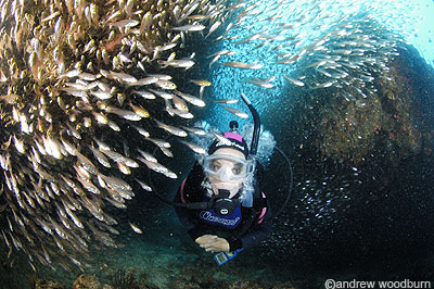 copyright Andrew Woodburn, scuba diving amoungst fish